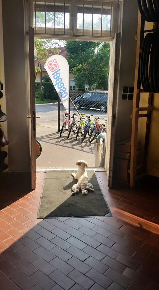 Várja a vevőket a céges kiskutyánk