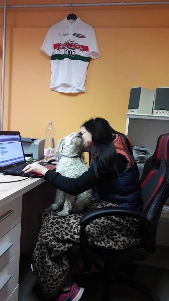 Kutya egy munka